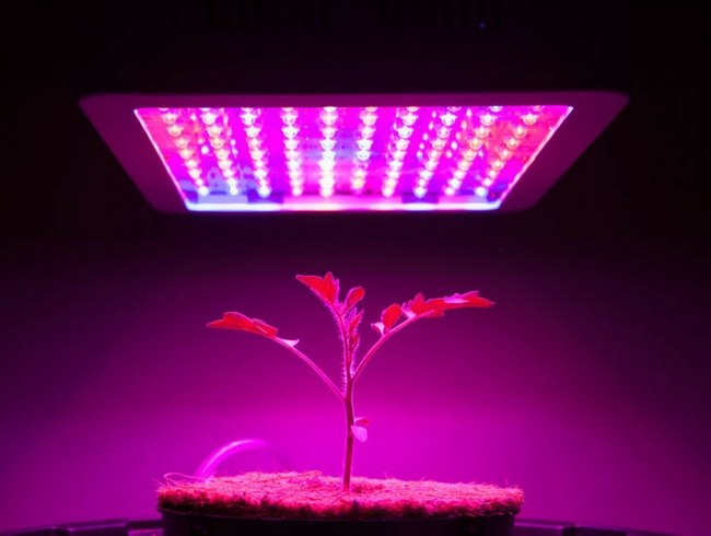 strip led grow coltivazione indoor